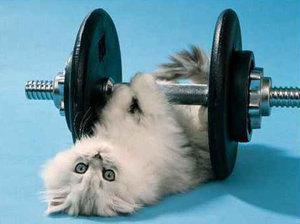 gym-cat